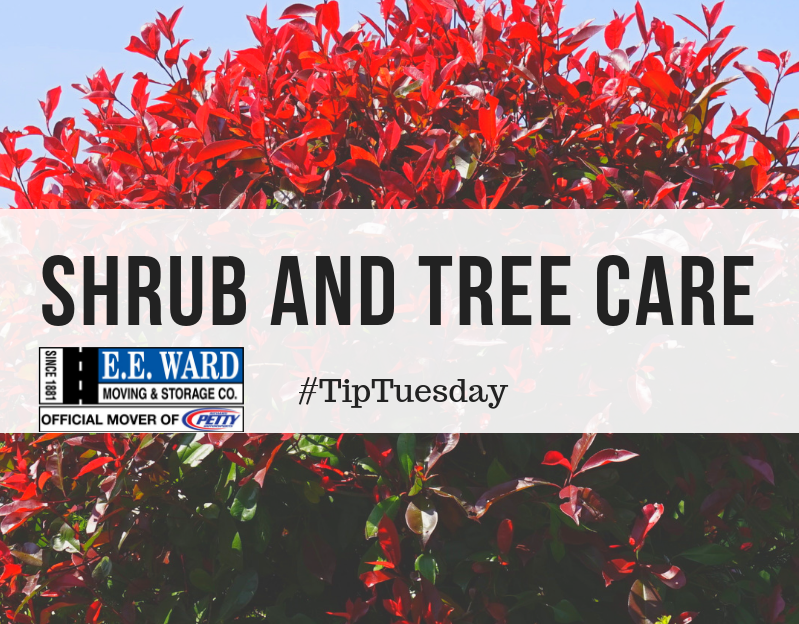 #TipTuesday- Caring For Shrubs and Trees
